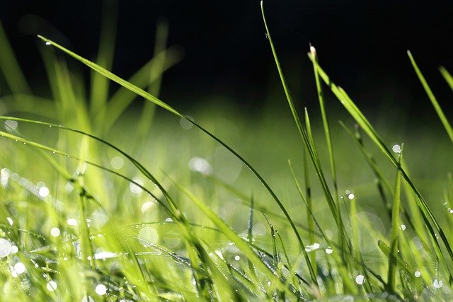 aerator do trawy